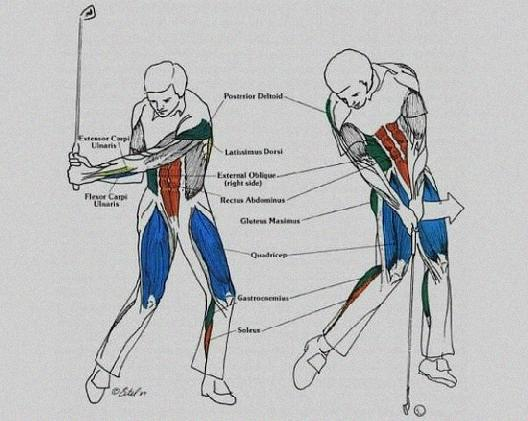 Exercises To Increase Flexibility For Golf Swing Exercises